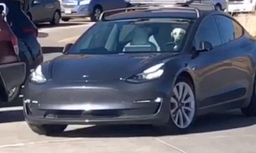 Собака владельца Тесла отправляется в автопилот на радость катания