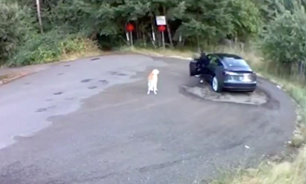 Владелец Tesla пойман и обвинен в жестоком обращении с животными, сообщество электромобилей ополчилось