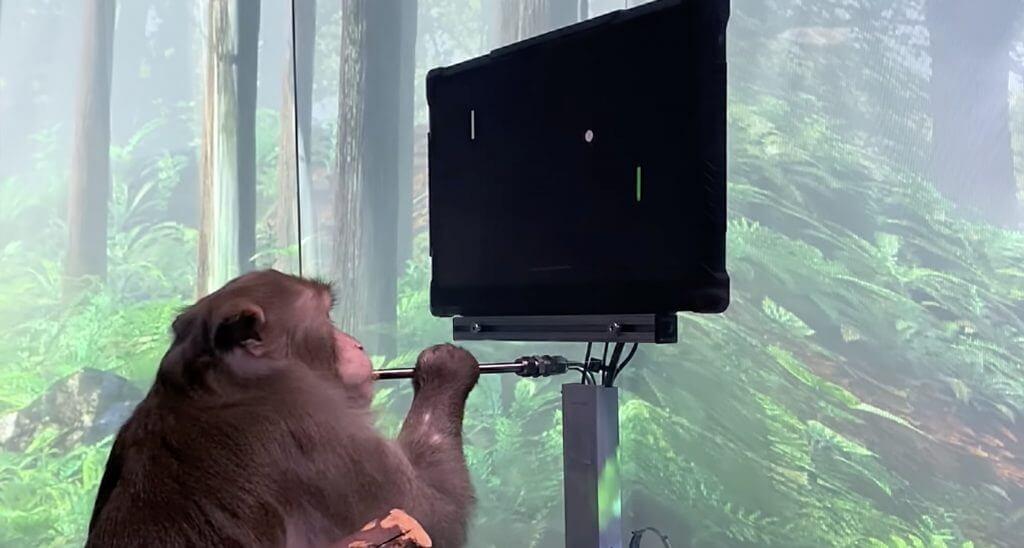 NeuraLink Илона Маска выпускает видео, в котором обезьяна играет в игры мысленно